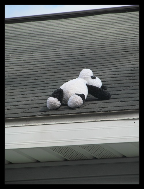 panda on the roof